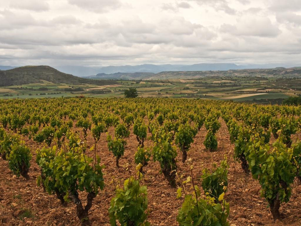 Maisema Artuken Finca de los Locos -tarhoilta. Hänen vaariaan kutsuttiin hulluksi, kun hän osti viinitarhoja korkealta.